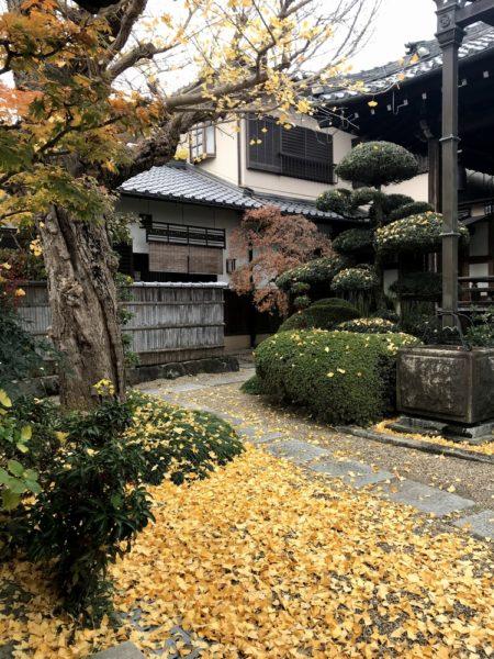 西教寺さんでイチョウの落葉掃除