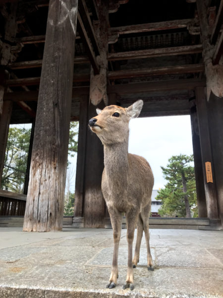 奈良若者サポートステーション「良いお年を!」